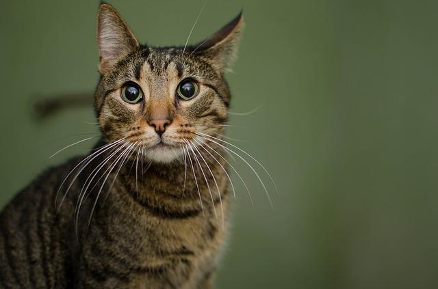 cat-3031834_640.jpg
