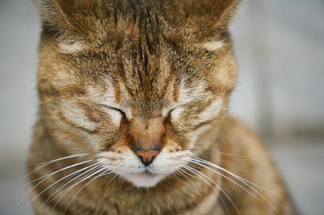 cat-2306705_640.jpg