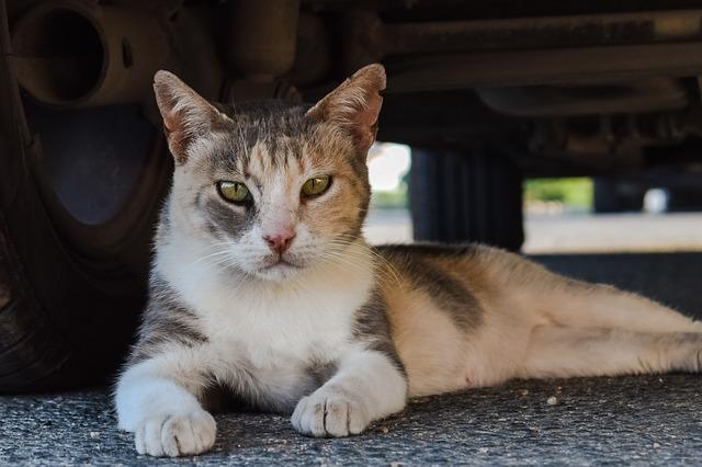 cat-2439079_640.jpg