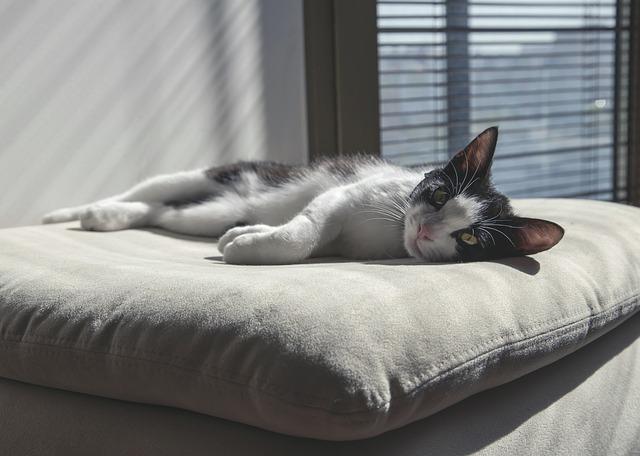 cat-736455_640.jpg
