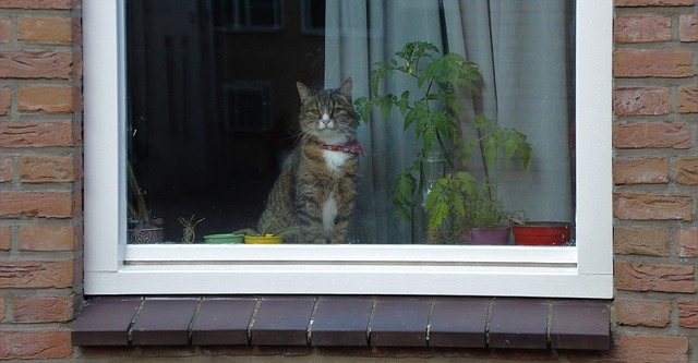 cat-1547112_640.jpg
