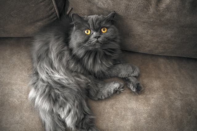 cat-3792181_640.jpg