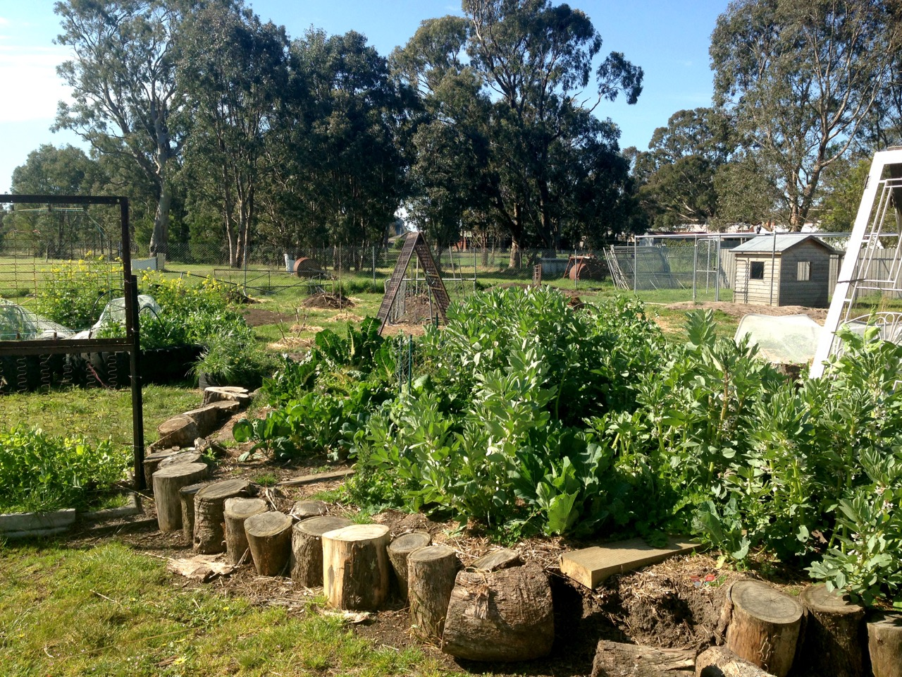 melbourne_school_vegetable_gardens.jpg