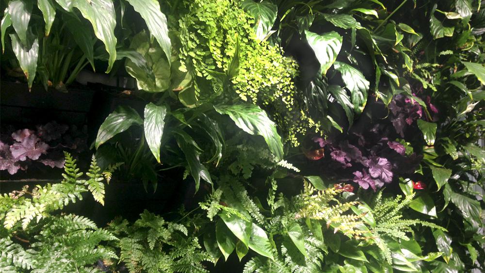 office_plants_melbourne.jpg