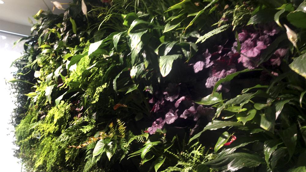 melbourne_vertical_wall_gardens.jpg