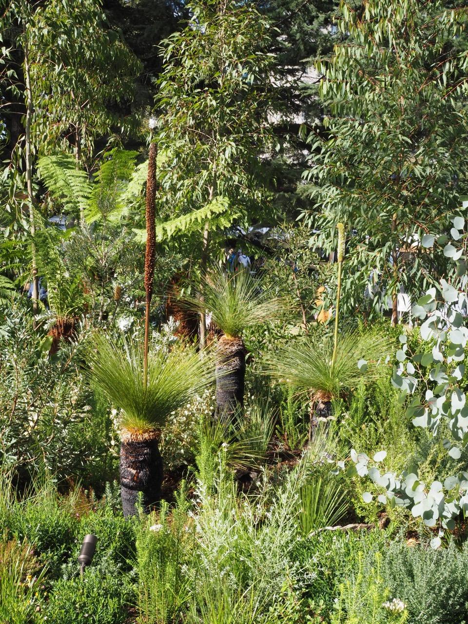 australian_garden_melbourne.jpg