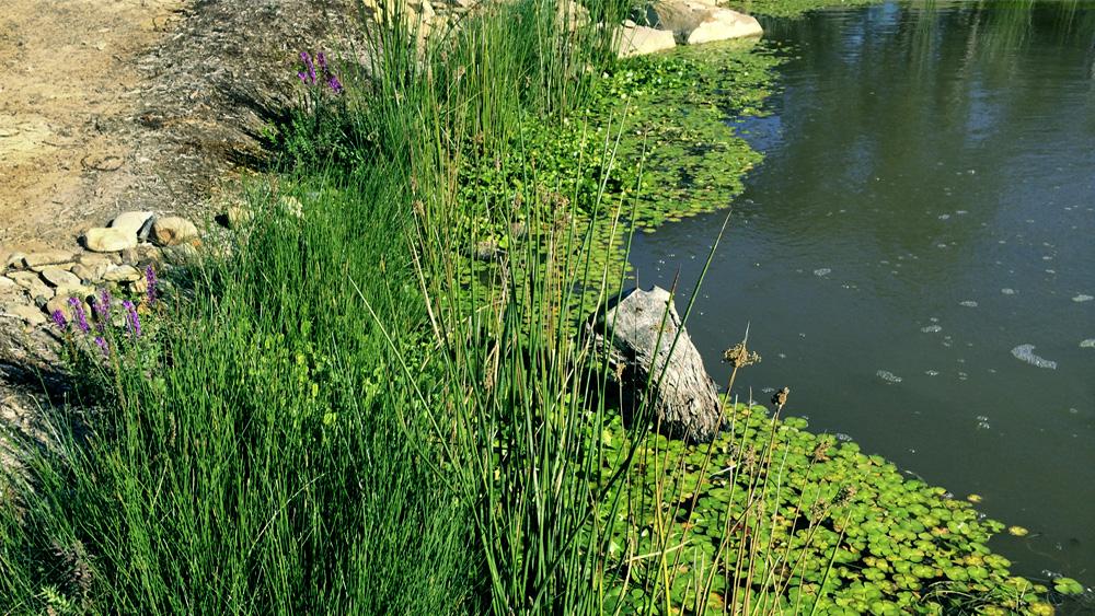 wetland_design_melbourbe.jpg