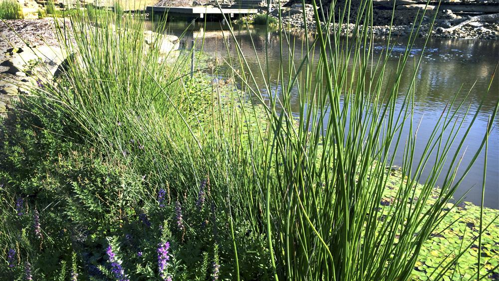 stem_landscape_design_wetland.jpg