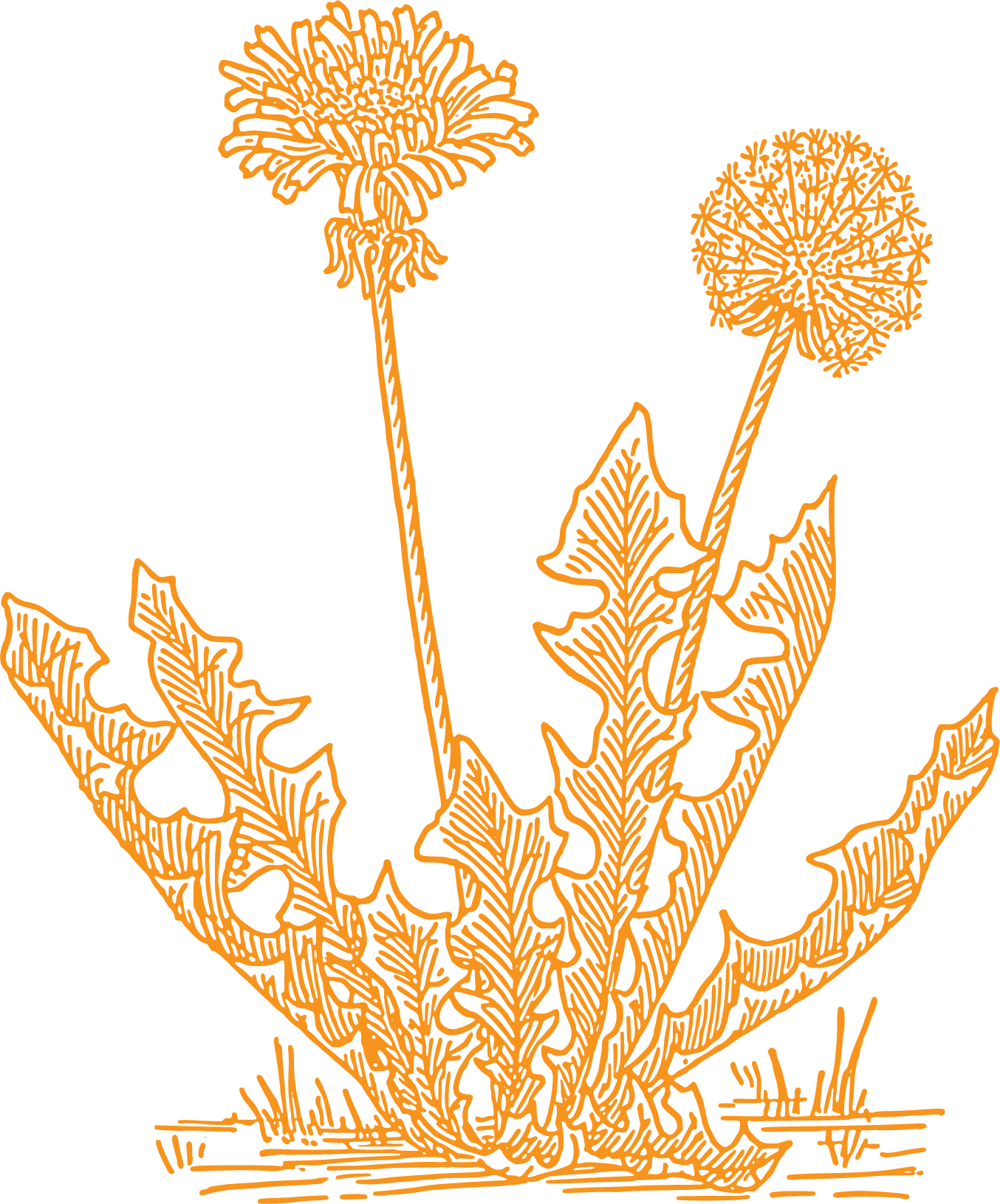 Dandelion artists logo
