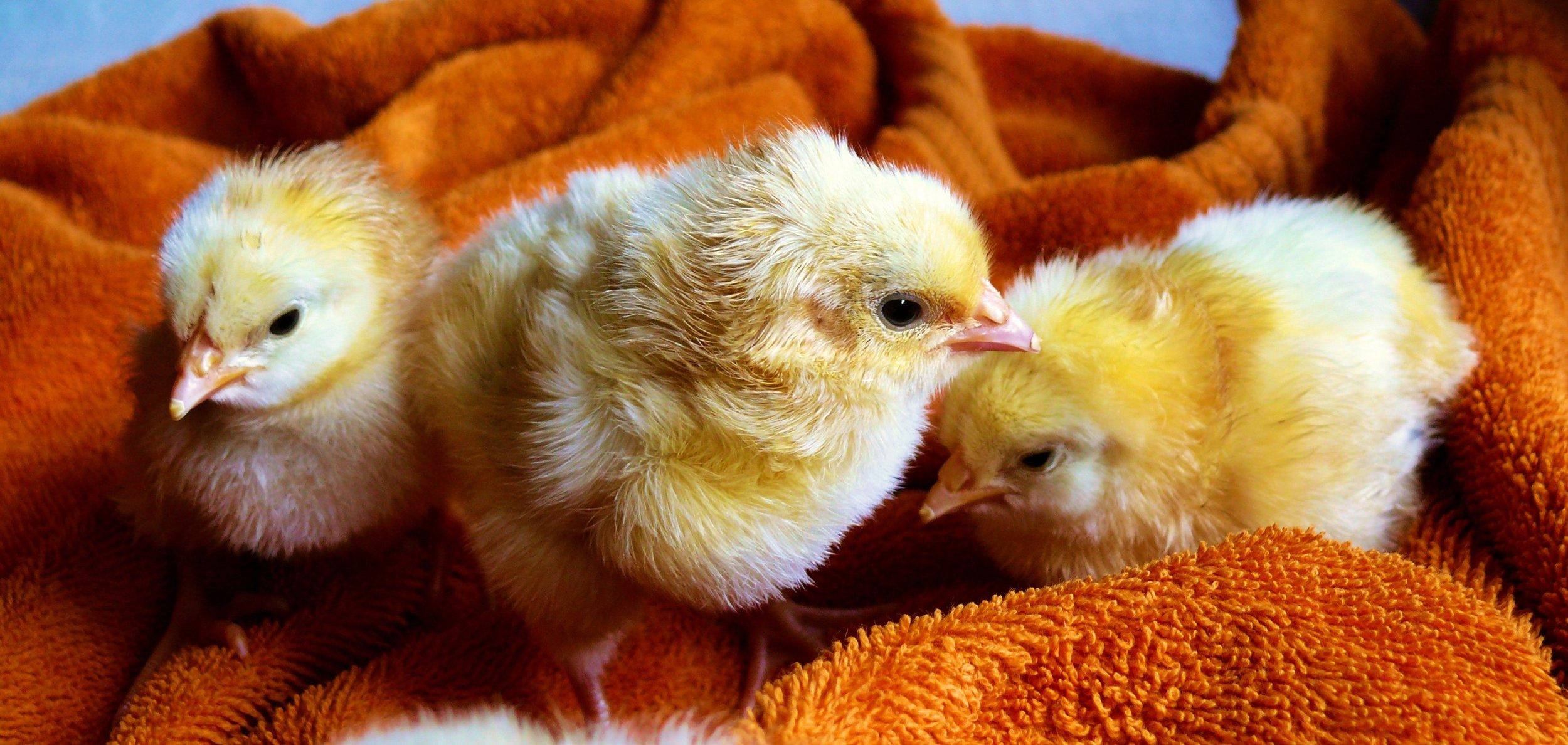 vegan-animal-rights.jpg