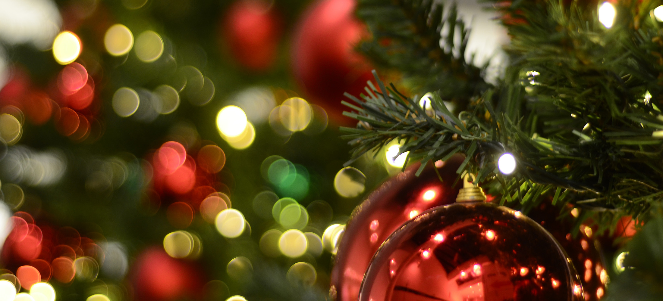 christmas-tree-wide-crop.jpg