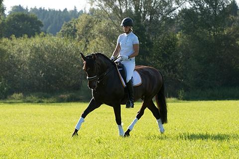 selano-wiese-54_meine_spanischen_Pferde.jpg