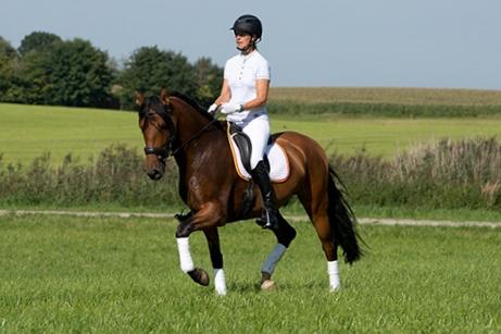 Aramis-wiese-36_meine_spanischen_Pferde.jpg
