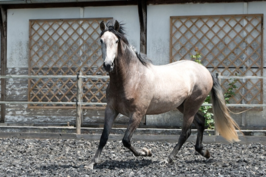 Aragon-Platz-12_meine_spanischen_Pferde.jpg
