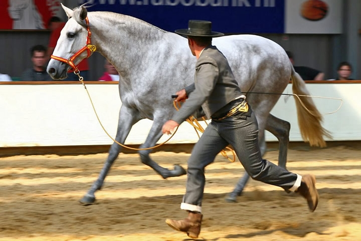 "Breeding show France 2005 - Pierra Canta won the title ""Best movement"" (meilleurs allures)"