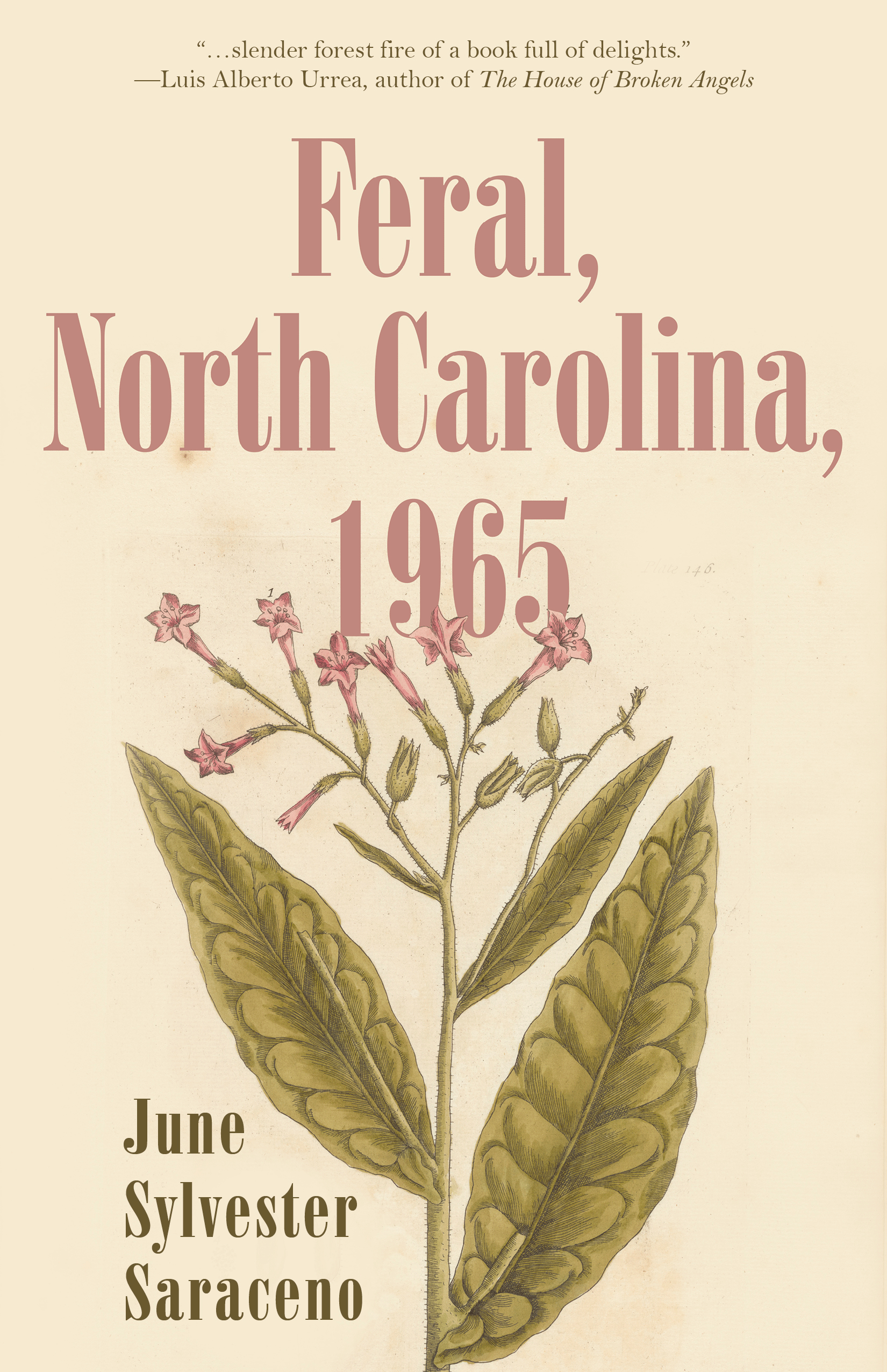 Feral, North Carolina, 1965 by June Sylvester Saraceno