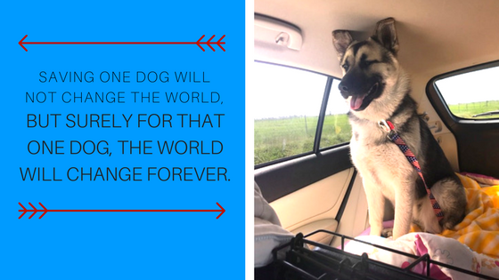 SAving one dog will not change the world,.png