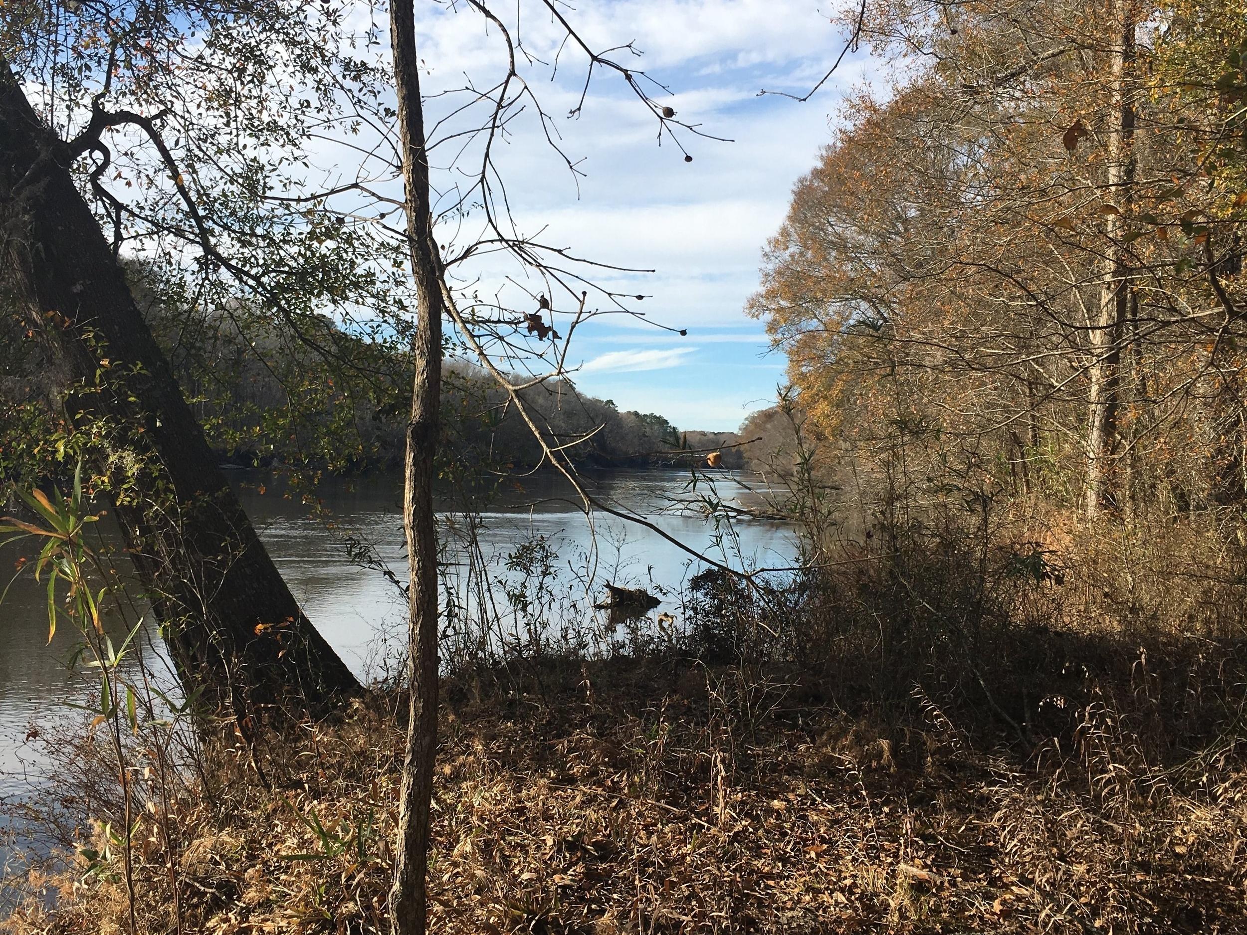 Savannah River from Recess Plantation SC.JPG