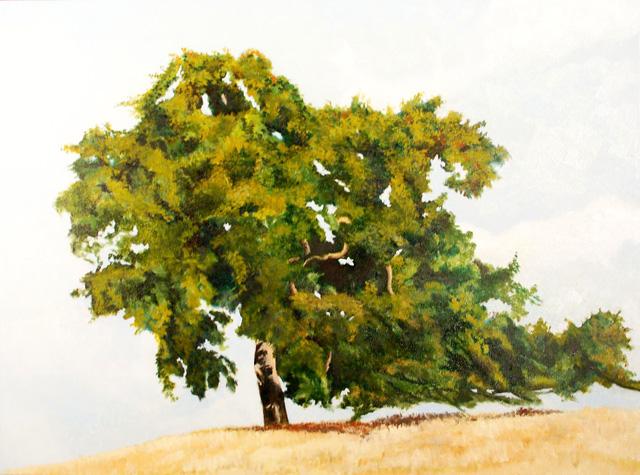 Scott's Tree #3