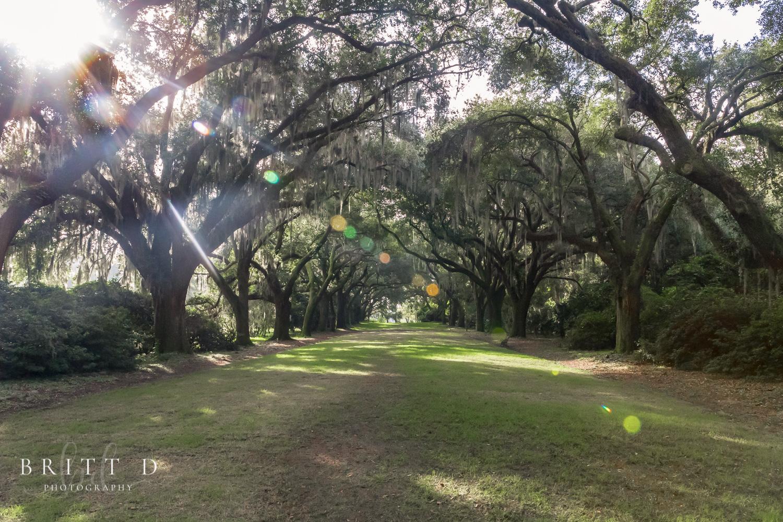 Charleston photographer-34.jpg