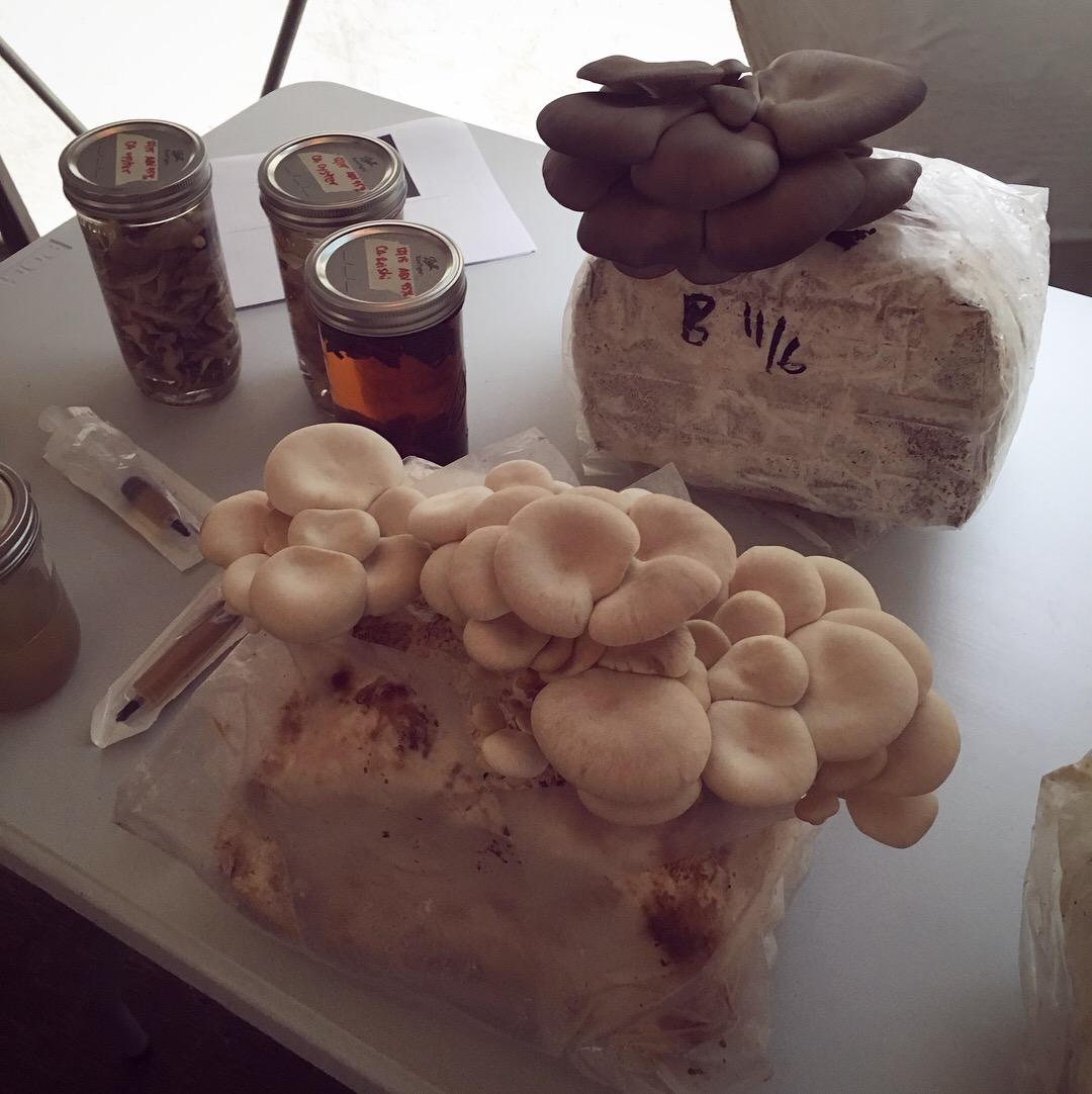 Mushroom Propagation Class