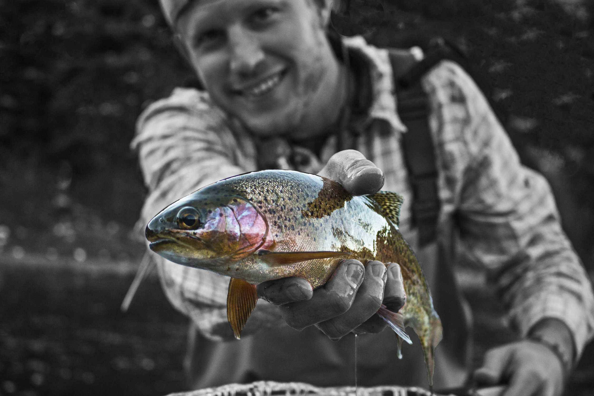 Pleasantville Rainbow Trout.jpg