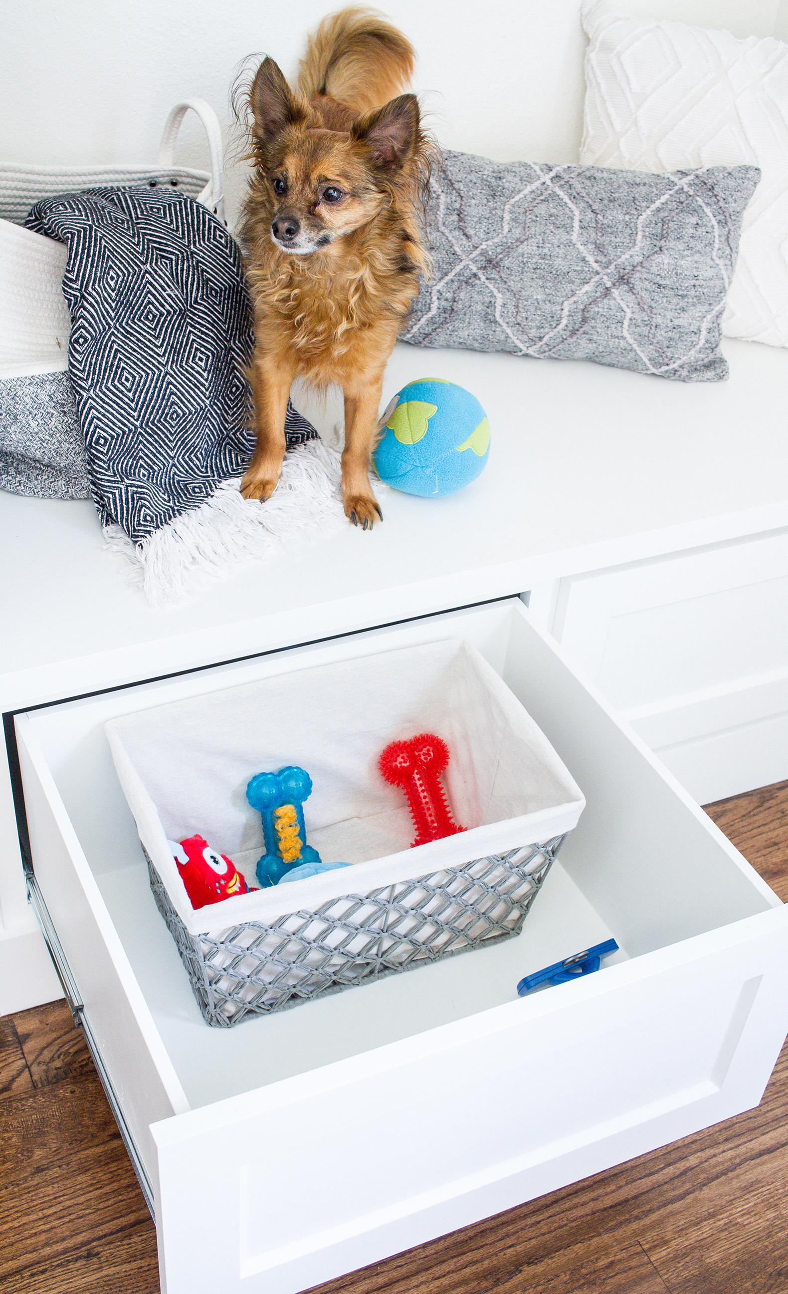 Dogs and Decor 10.jpg