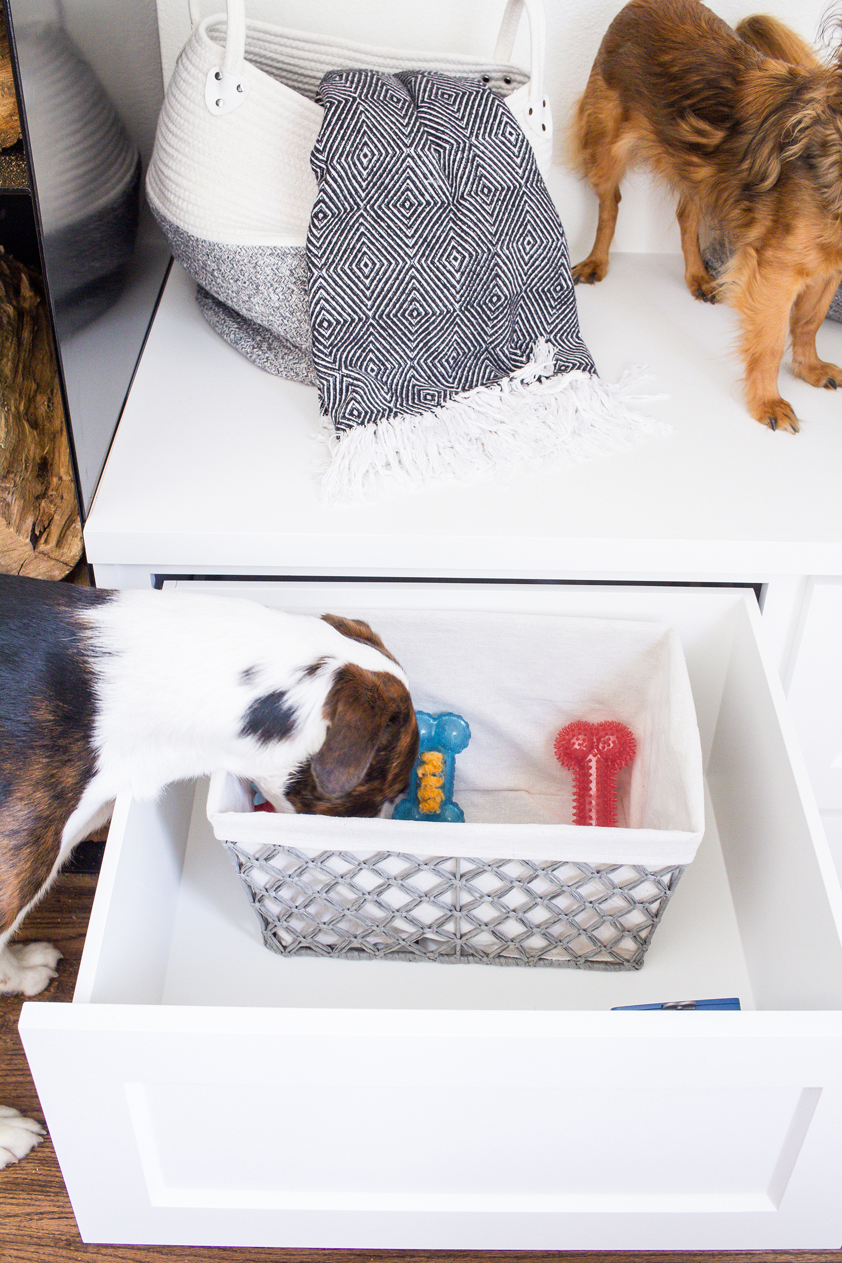 Dogs and Decor 11.jpg