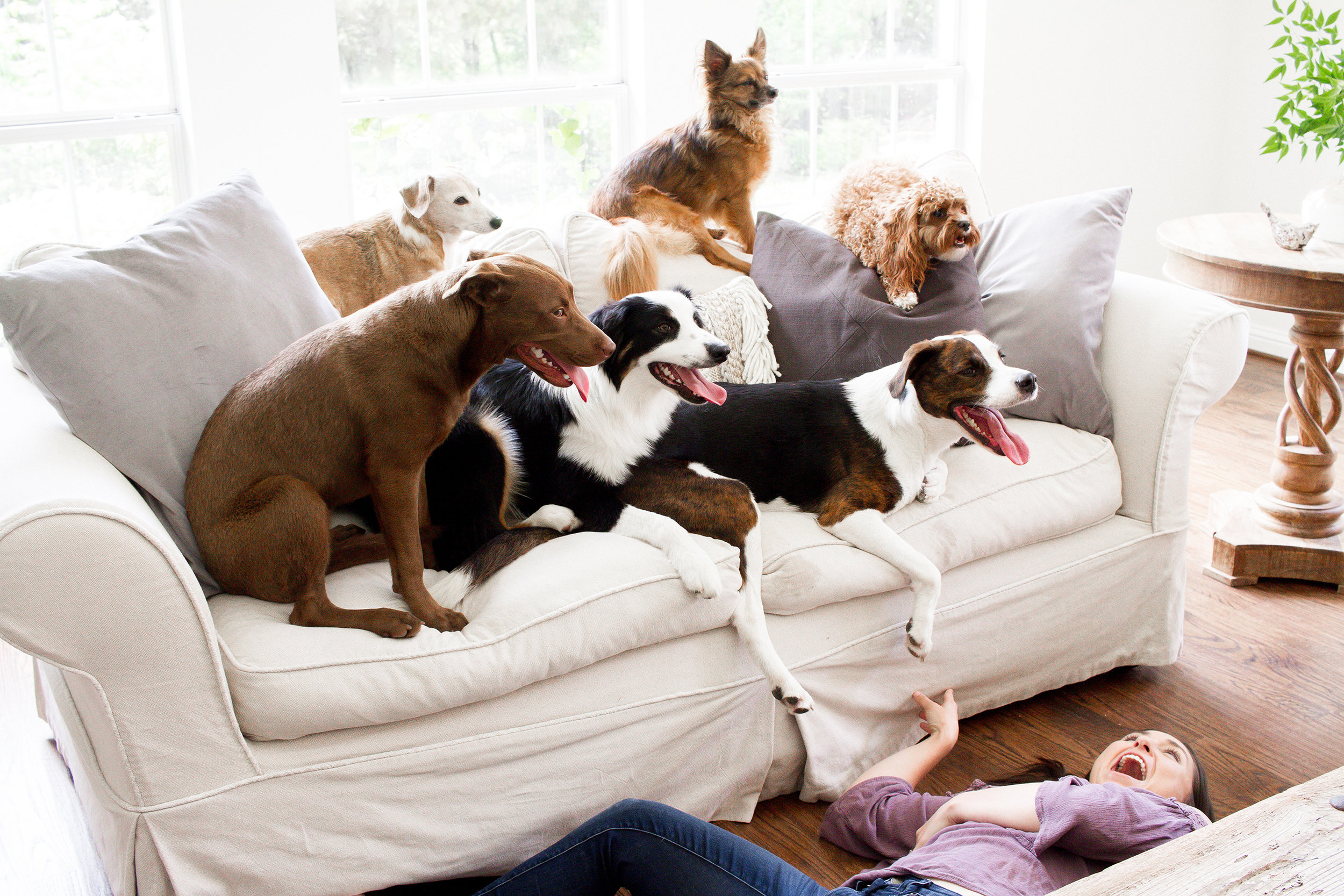 Dogs and Decor 14.jpg
