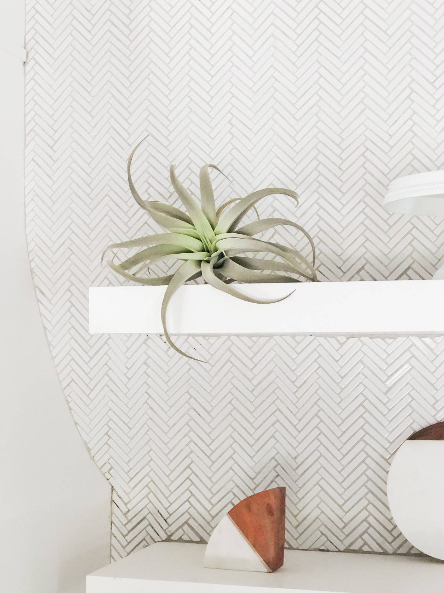 Our House Plants - Air Plants Care Tips