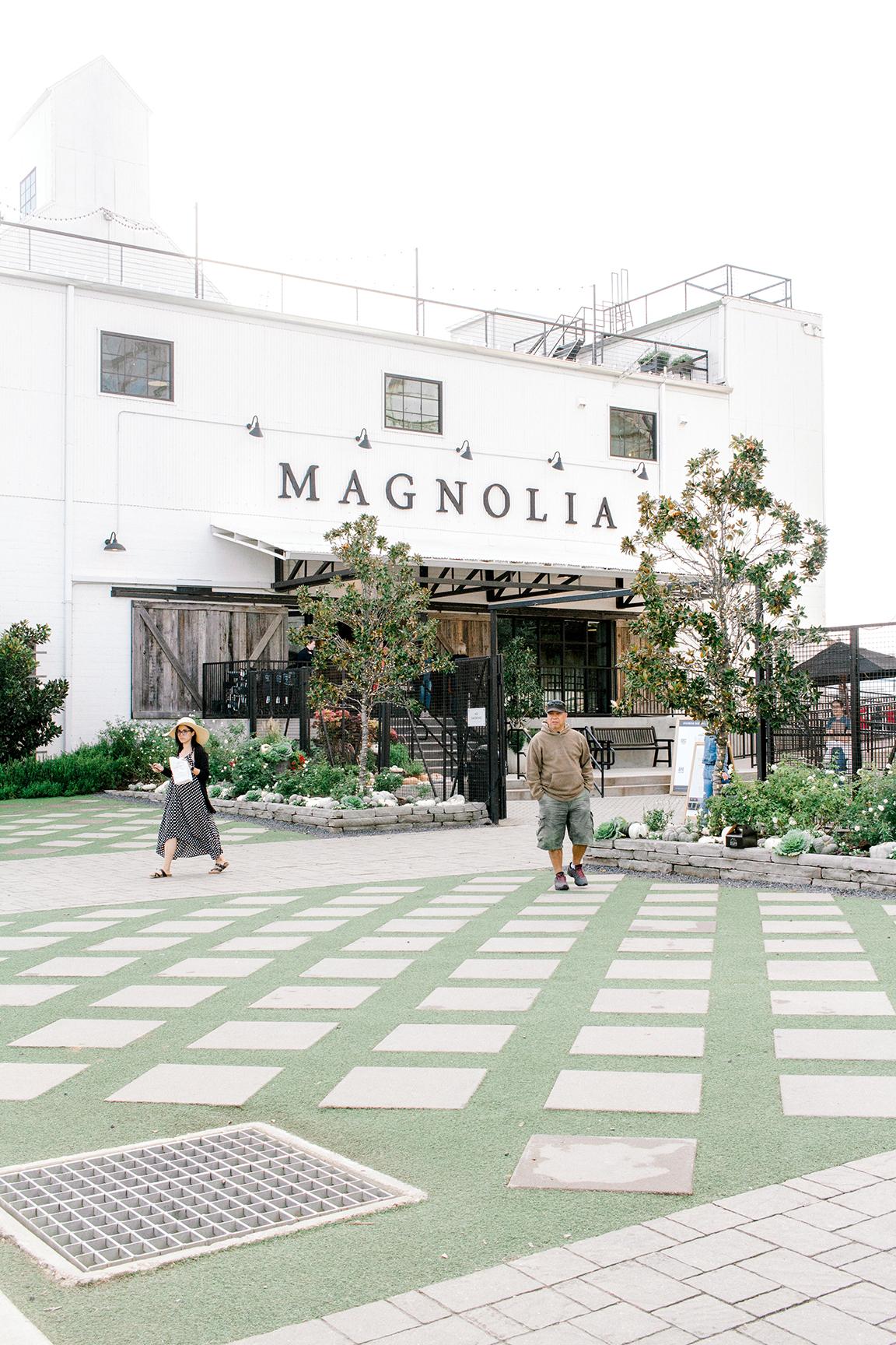 Magnolia Trip 2.jpg