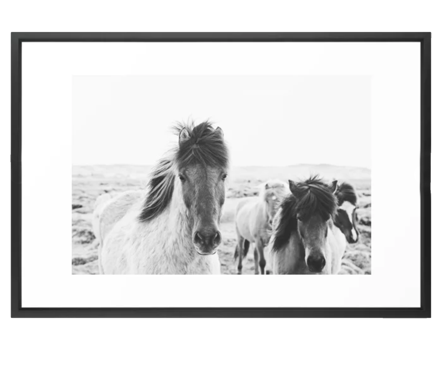 Black and White Horse Print.png