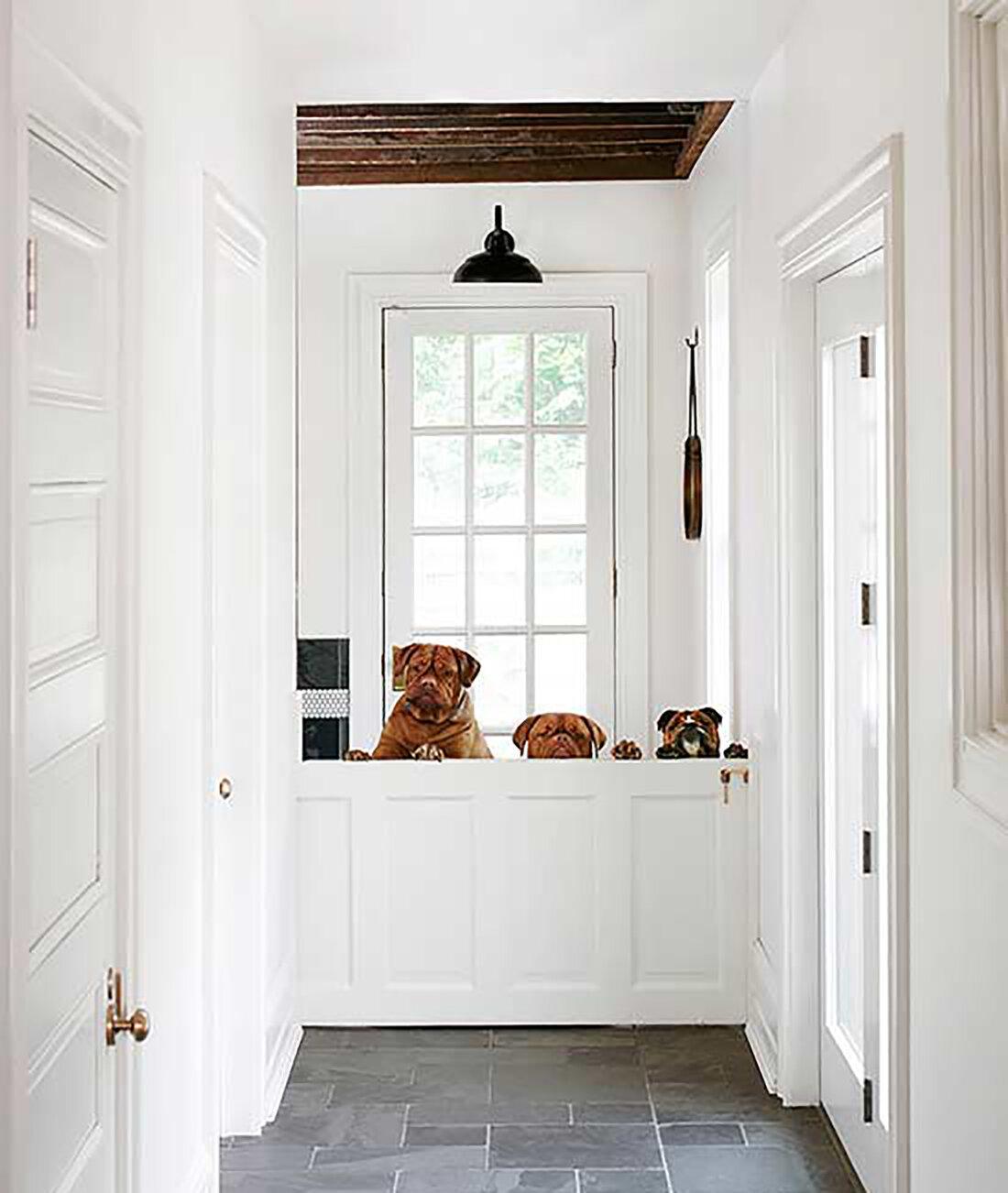 Dogs and Design Dutch Door.jpg