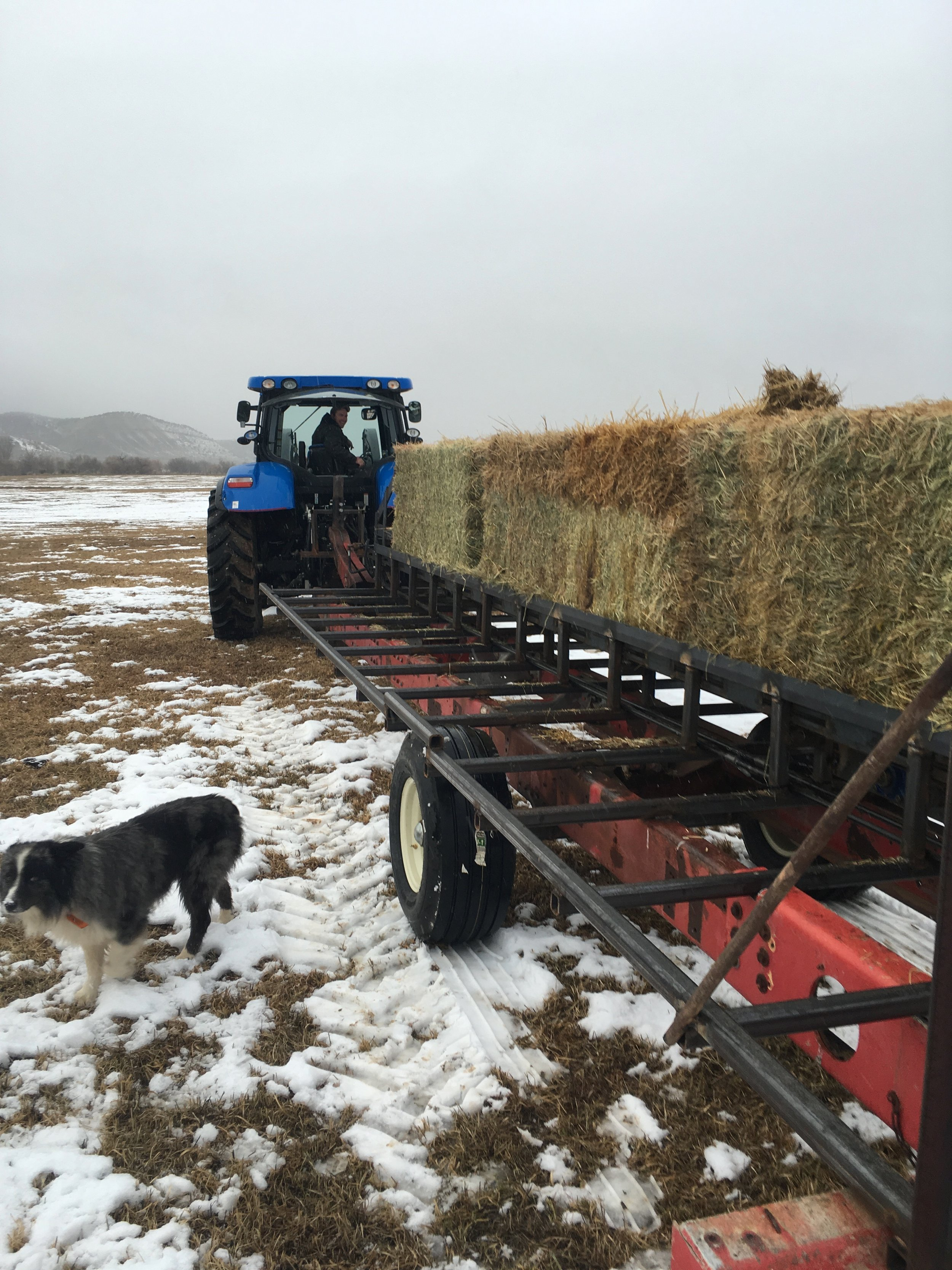 My brother trying out the new hay feeder. 12/16/17