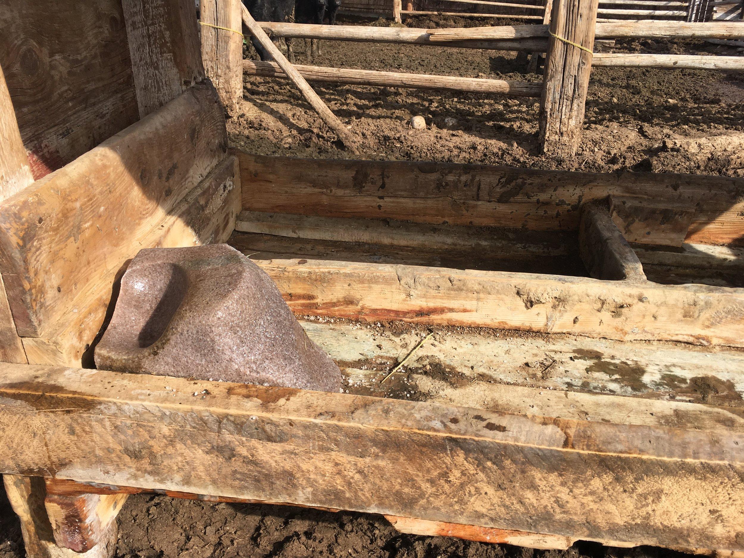 A partially eaten trace mineral salt block in a salt feeder. 4/1/18