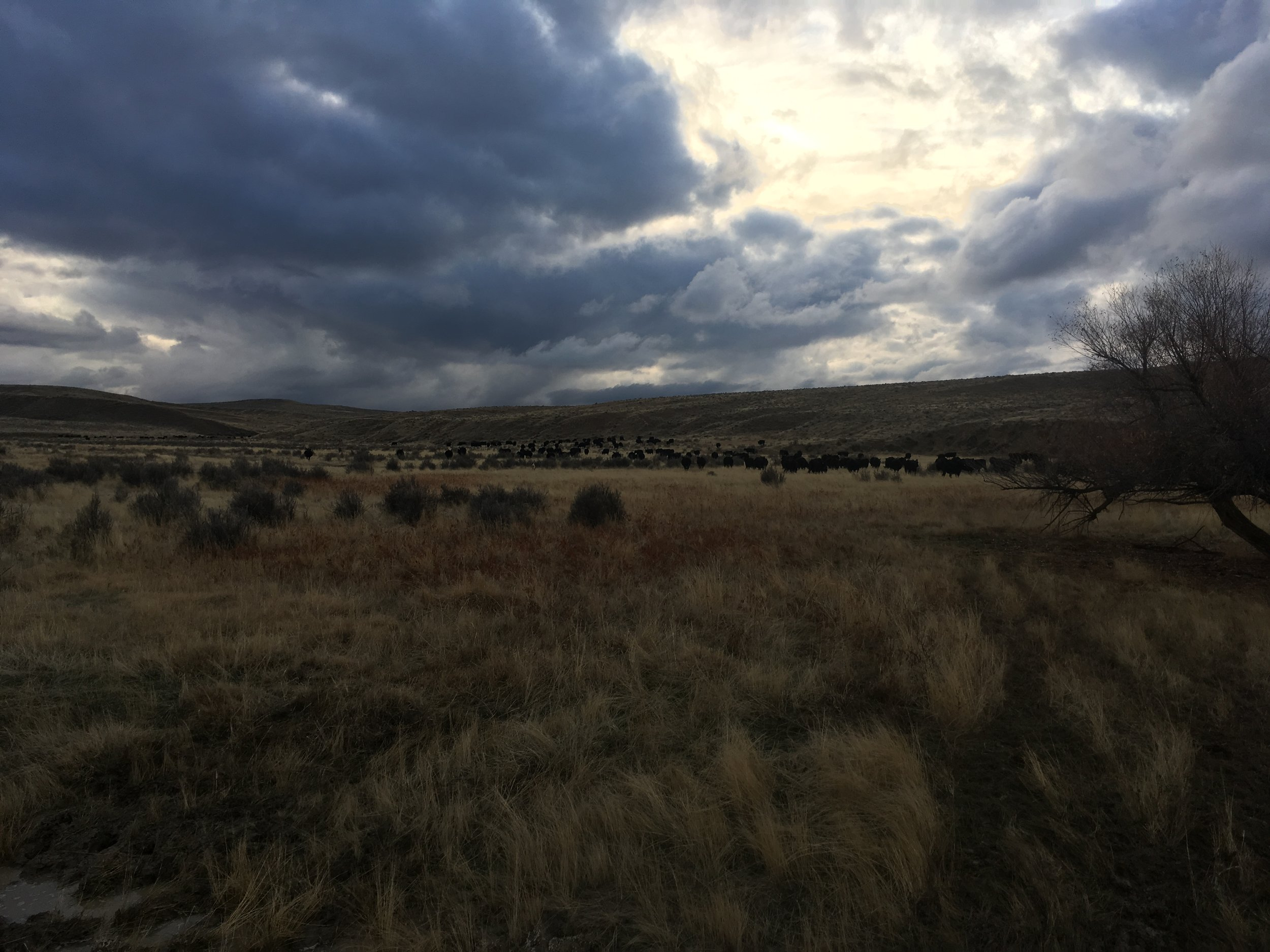 After the cows were sorted and taken to their pastures on Tuesday