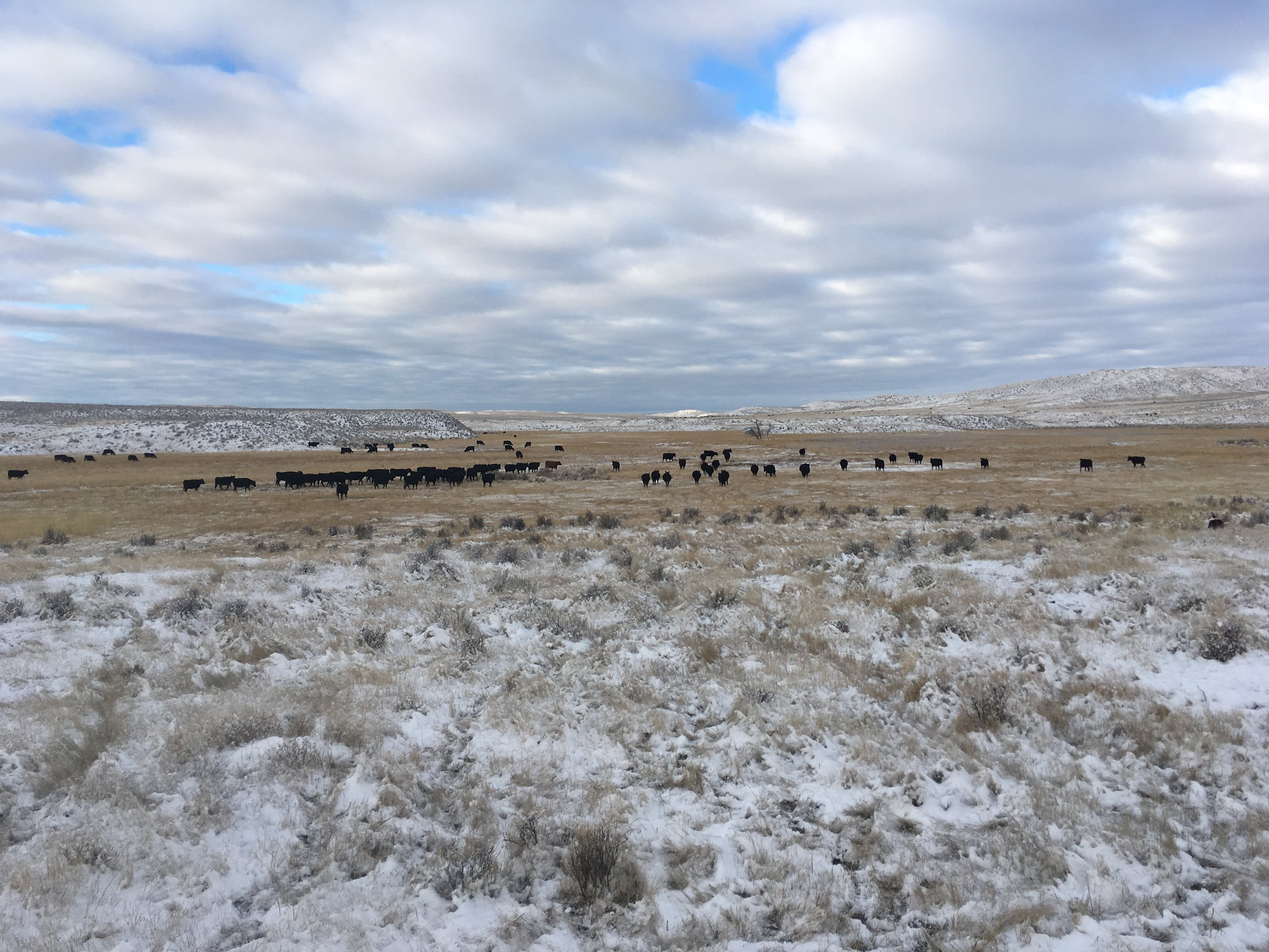 Gathering them to go out to the badlands Wednesday morning.