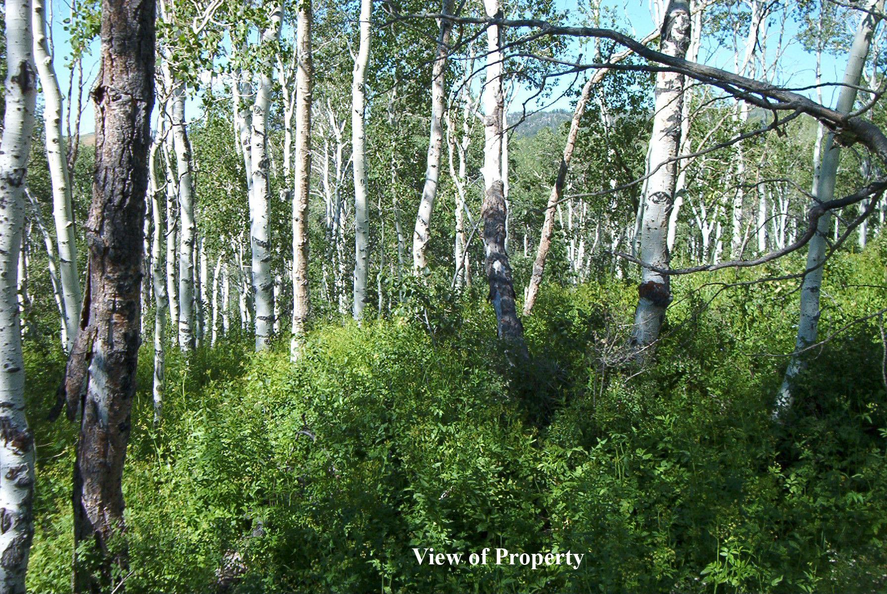endless_trees.jpg