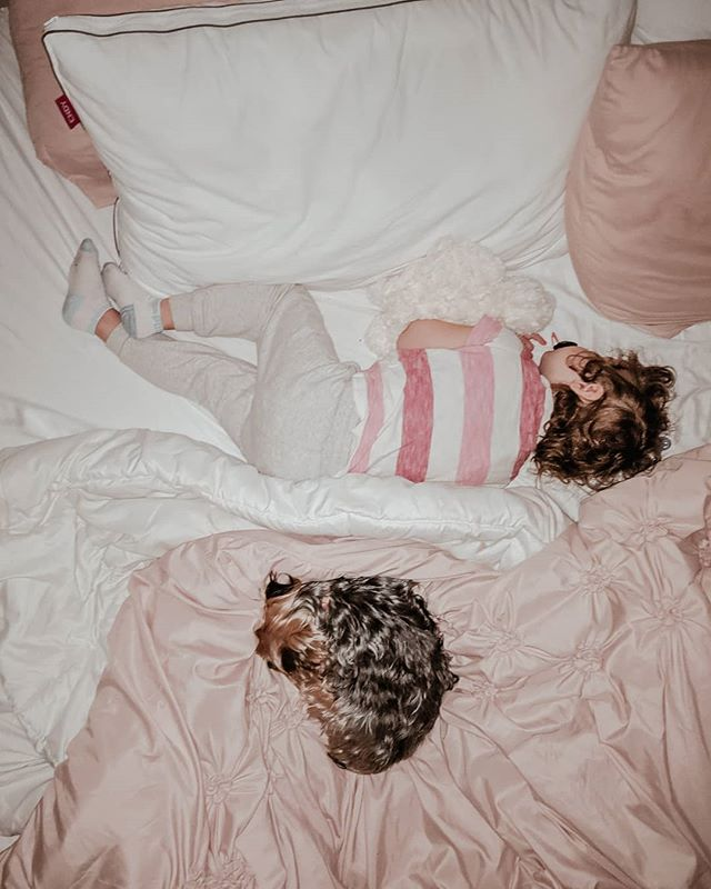 |😴| • Anyone else wishing they had 5 more minutes in bed on this cold moody Monday?🙋‍♀️ • • If I had it my way she would be in the cutest pajamas, the blankets perfectly made with natural sunlight shining in. But, what I got was so much better: a real, middle of the night, mismatched photo - I can't stage their love for our @Endy. . . . To hear more about why we love our Endy king & bedding head over to my website to read my honest 100-night review. And, if you just can't wait to get your hands on this dream of a mattress use promo code MILKSTAINS50 for $50 off of any size of Endy mattress! #Endypartner *ad . . . #momlife #puppiesandbabies #kidsanddogs #yorkiesofinstagram #yorkshireterrier #mylifebelike #yorkshireterrierstagram #yorkiepuppies #mondaymood #itsamood #mymotherhood #mycountryhome #allpinkeverything #realstagram #reallife #bedroomgoals #motherhoodandme #momofgirls #girlmom #yycinfluencer #yycnow #yycliving #mymamahood #motherhoodunfiltered