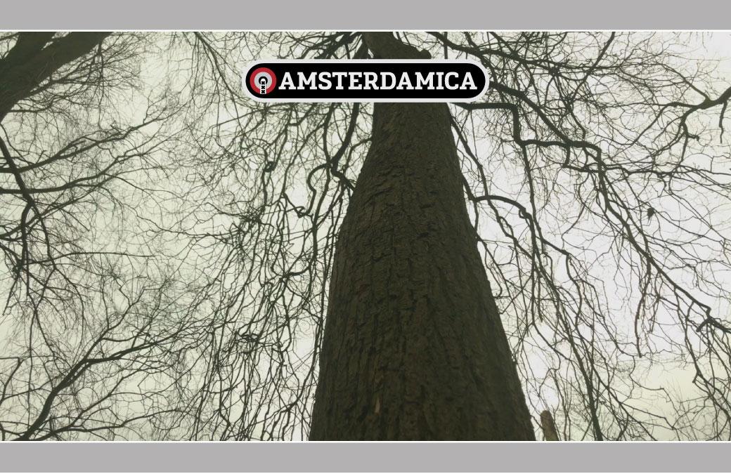 Amsterdamica S01E12: Theodora Ree