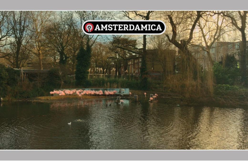 Amsterdamica S01E13: Robot Flamingos