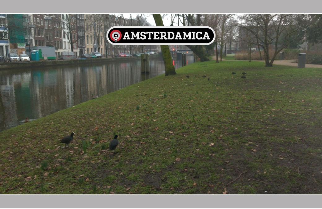 Amsterdamica S01E43: Bird Trip