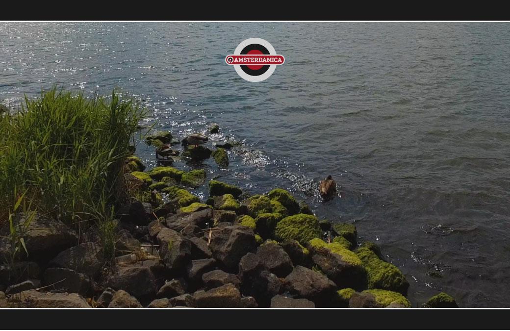 Amsterdamica S03E08: Them There Ducks Again