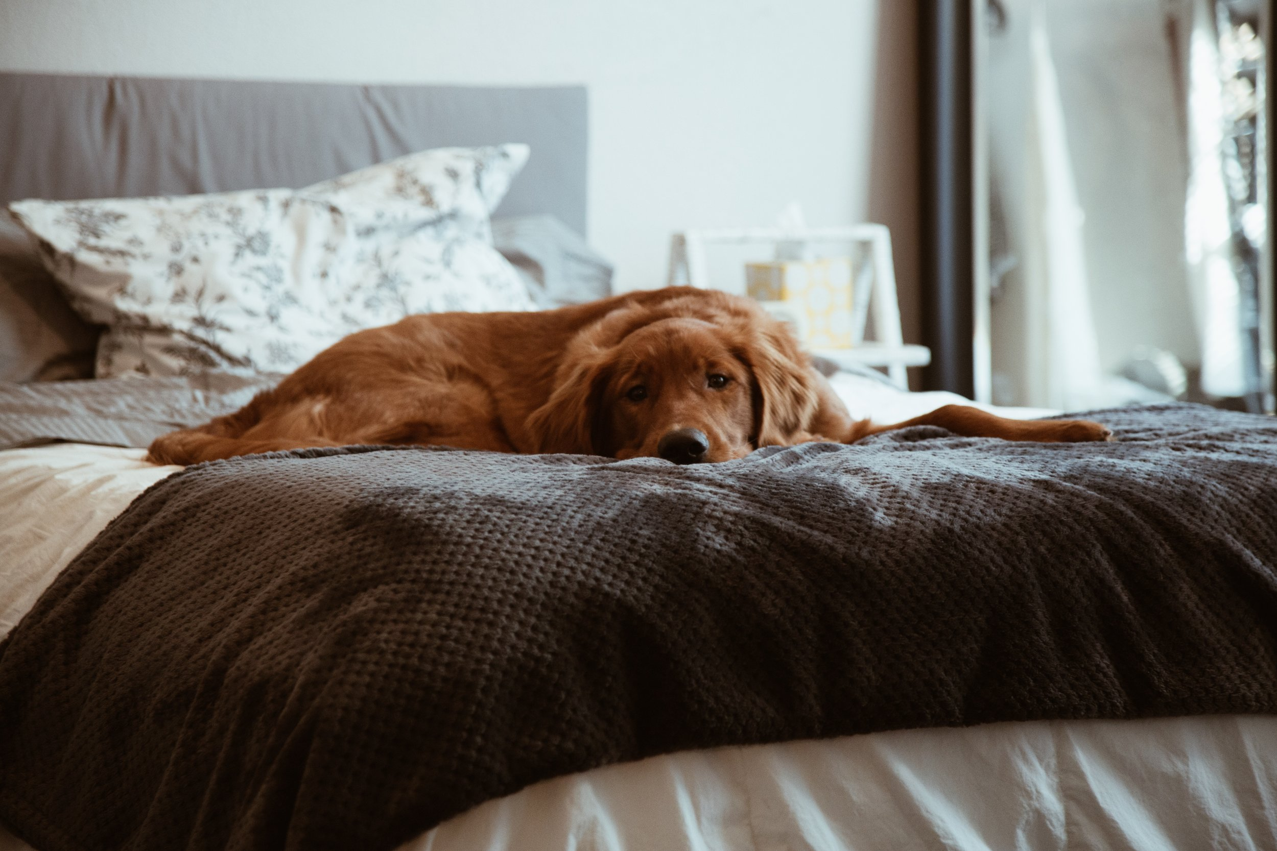 Tips:  Don't allow dogs on furniture  Don't speak to your dog when you go out or come home  Don't leave food out for your dog, and feed adult dogs once a day  People go through doorways first