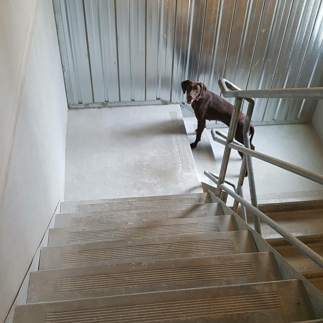 Magda learns about stairs