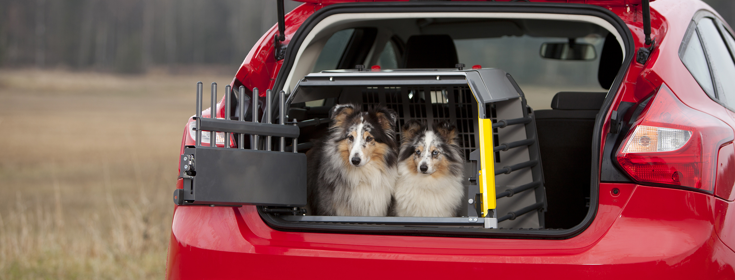 3G variocage compact single_xl_autumn_dogs car_21X10cm_print.jpg