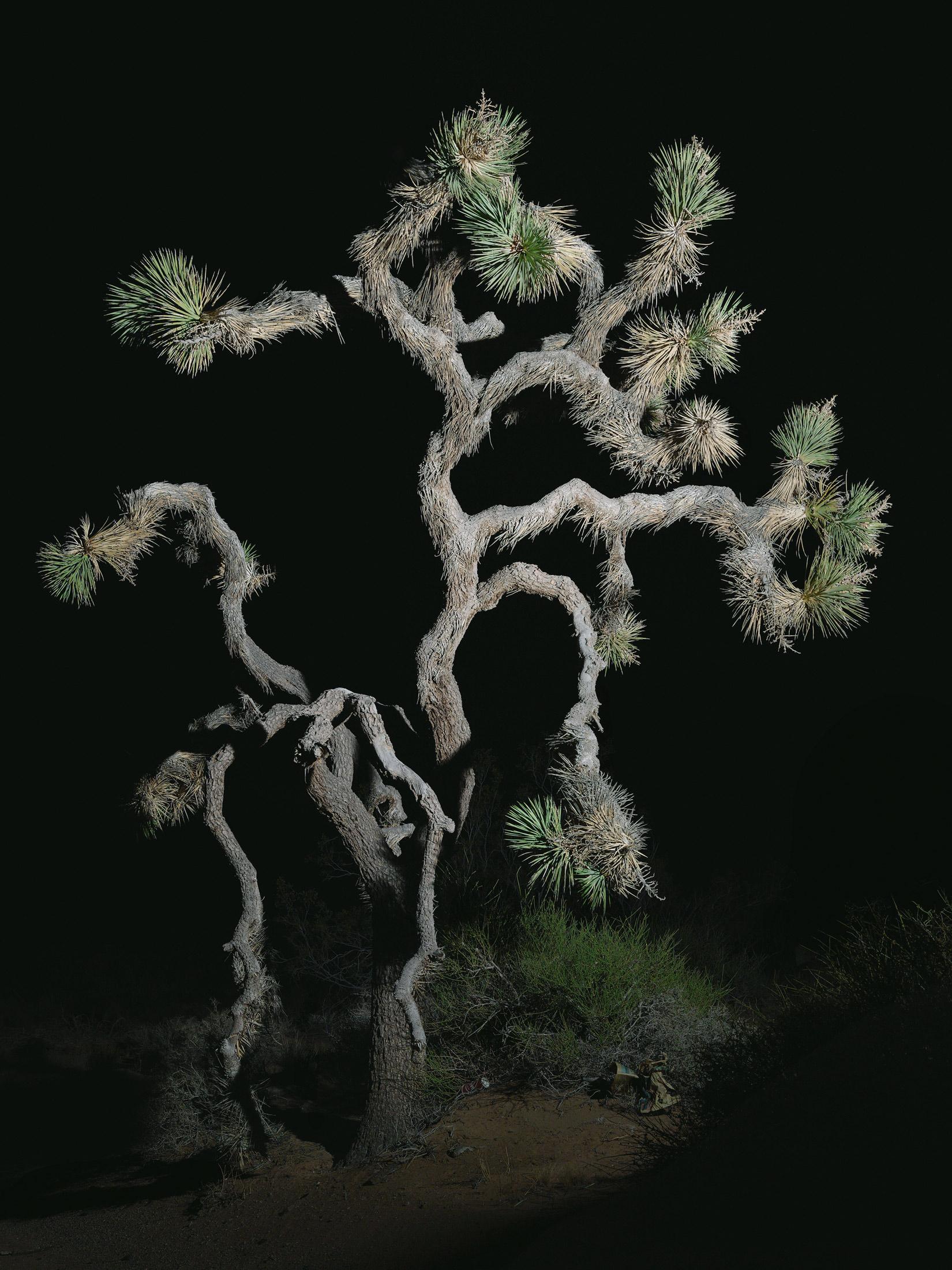 tree #4    70x94 in/180x239cm  1+1AP 60x80 in/152x203cm  2+1AP 45x60 in/114x152cm  3+1AP 30x40 in/75x100cm  5+1AP