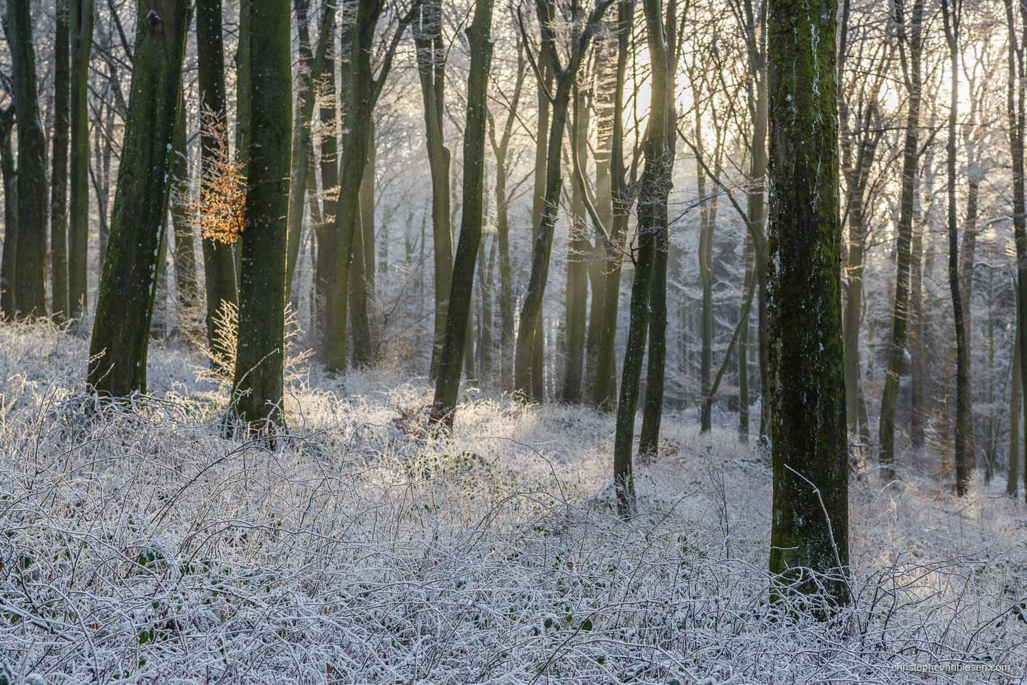 Snow in Luxembourg - Winter sunset in a forest somewhere in the Grand-Duchy of Snow in Luxembourg - The Ice Forest
