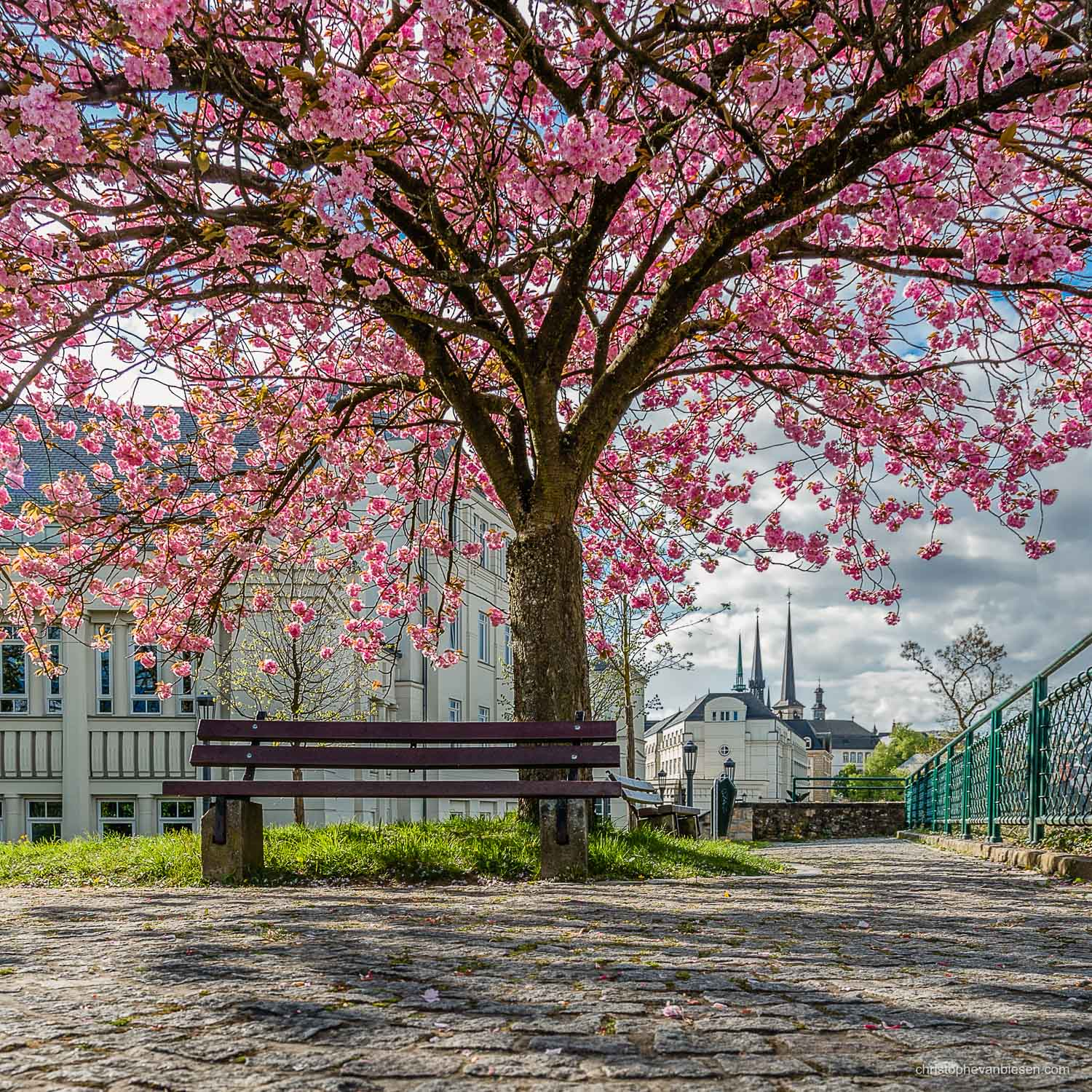Spring in Luxembourg - Spring in Luxembourg city on the Corniche from where you can see lots of different landmarks of the city including the Notre-Dame Cathedral - Live Again