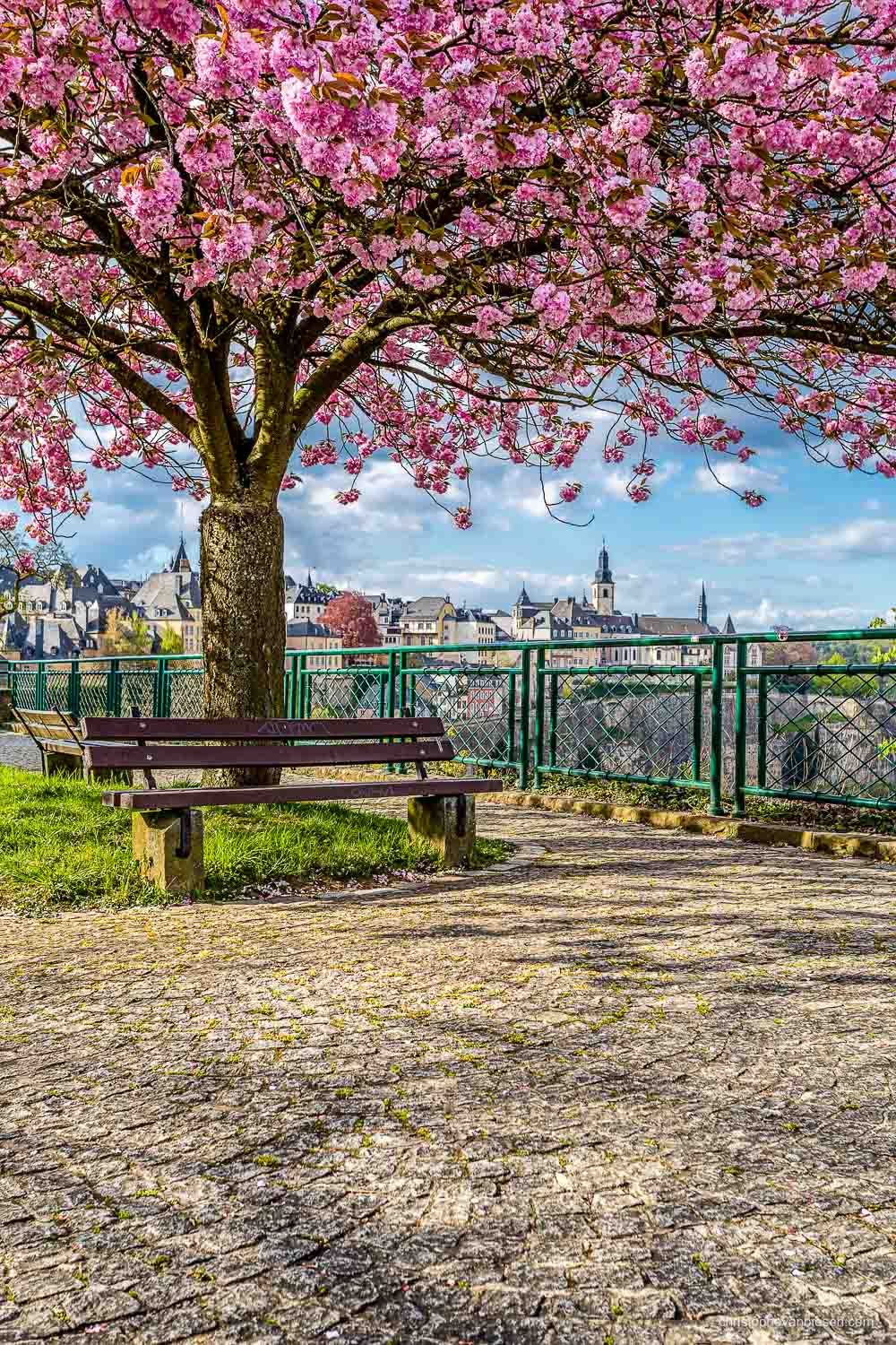 Spring in Luxembourg - Spring in Luxembourg city on the Corniche from where you can see lots of different landmarks of the city - Pink Canopy